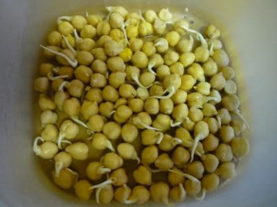 sprouted_chick_peas | hemp sprout bag